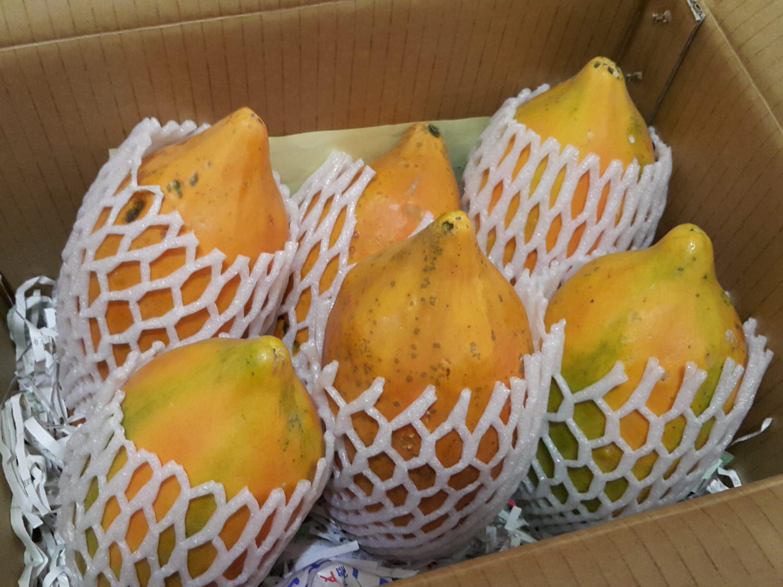 【香甜水果】不管直接吃或者變成飲品都是很甜很營養的水果 ➽ 茶壺夫妻幸福農物 の 甜蜜蜜木瓜